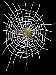 Prisión de tela y araña