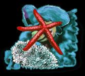 Estrella de mar de roca