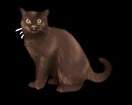Bruja de gato