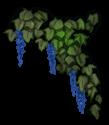 Flor de elfo