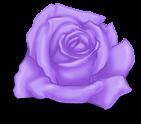 Pequeño día de san valentín rosa