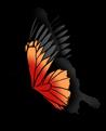 Gran mariposa