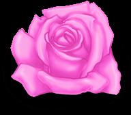 Gran rosa dia de san valentin