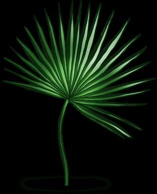 Palma de tahití