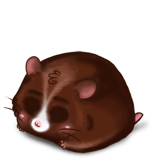 Adopta un Hámster Choco