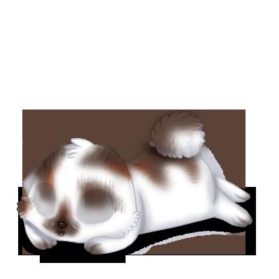 Adopta un Conejo Marrón y blanco