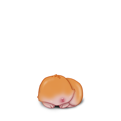 Adopta un Conejo Carnero rojo