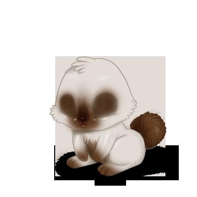 Adopta un Conejo Siamés