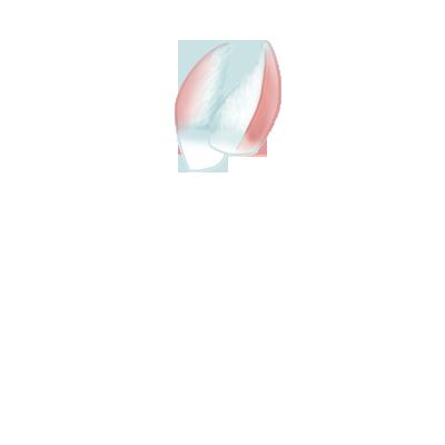 Adopta un Conejo Beige Marrón