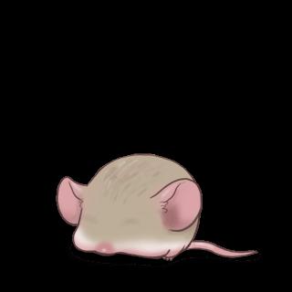 Adopta un Ratón Angora albaricoque