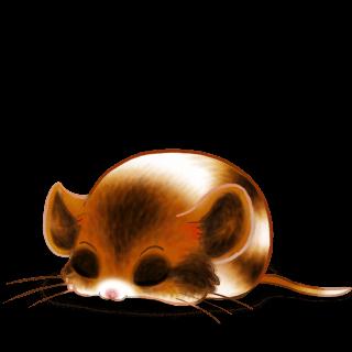 Adopta un Ratón Capuchino