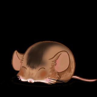 Adopta un Ratón Caramelo