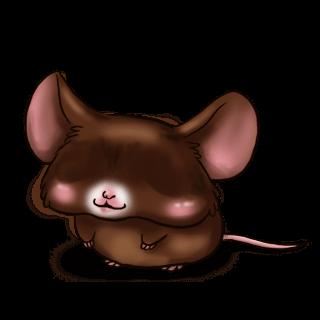 Adopta un Ratón Negro