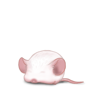 Ratón Albinos