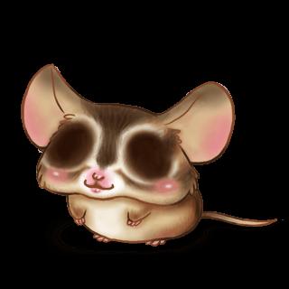 Adopta un Ratón Ardilla