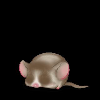 Adopta un Ratón Almendra garapiñada