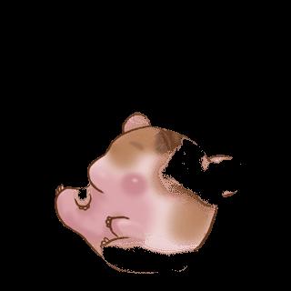 Adopta un Hámster Crema