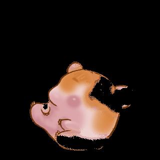 Adopta un Hámster Husky brown