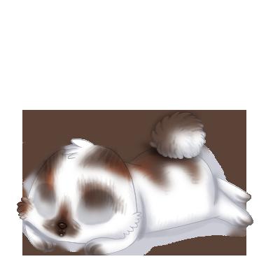 Adopta un Conejo Mandou
