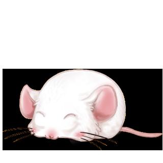 Adopta un Ratón Muerciélago