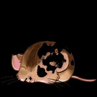Adopta un Ratón Chino