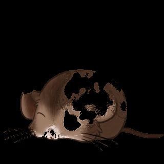 Adopta un Ratón Blanca