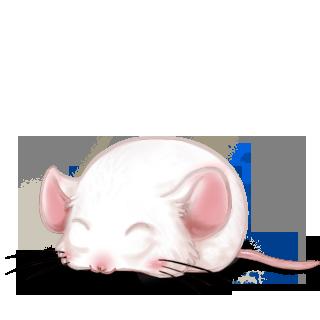 Adopta un Ratón Albino