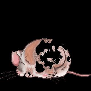 Adopta un Ratón Luz del sol