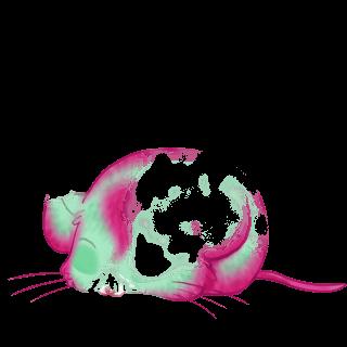 Adopta un Ratón Castaña