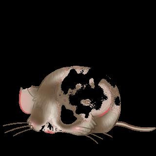 Adopta un Ratón Chocolate